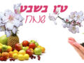 LA FESTA DEGLI ALBERI חַג הַאִילָנוֹת (Chag hailanot)